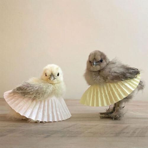 птицы в балетных пачках