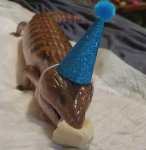 ящерице устроили вечеринку