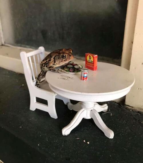роскошный кукольный дом для жабы