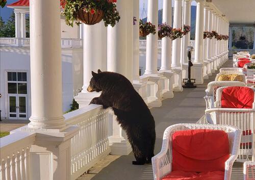 медведь смотрит на восход солнца