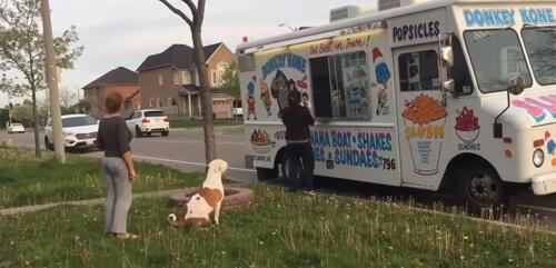 питбуль в очереди за мороженым