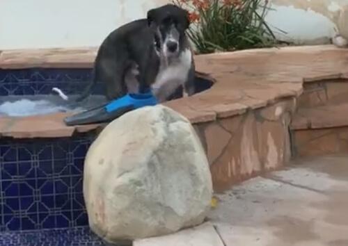 пёс в гидромассажной ванне