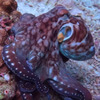 осьминог меняет цвет