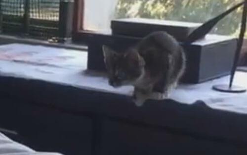 котёнок учится прыгать