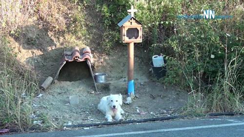 пёс на месте гибели владельца