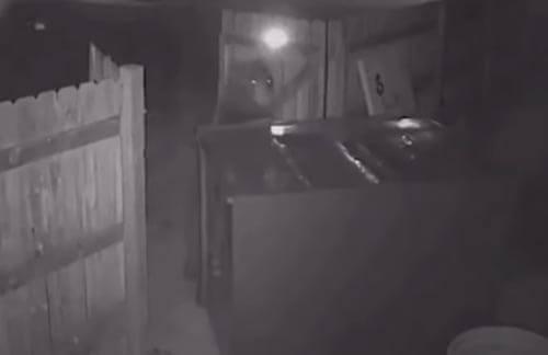 медведь украл мусорный контейнер