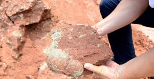 древние яйца динозавра
