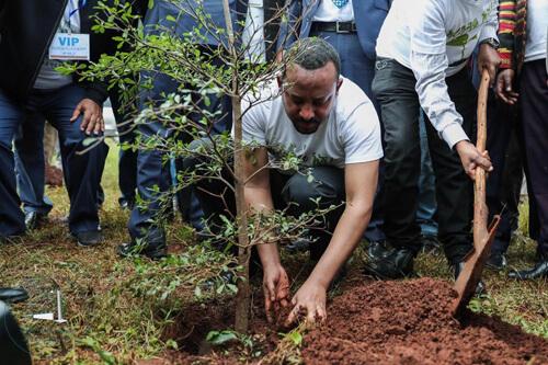 миллионы посаженных деревьев
