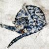 неприличные кошки на рисунках