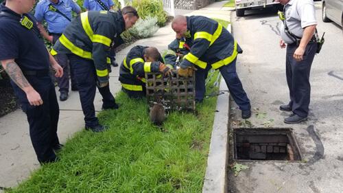 пожарные два часа спасали енота