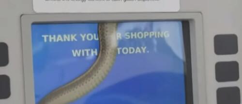 змея позади экрана на заправке
