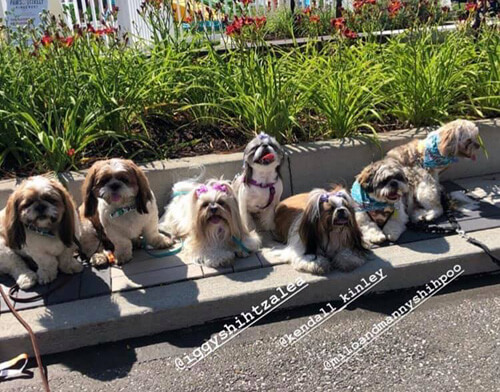 массовая собачья фотосессия
