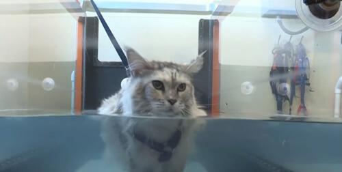 новое ветеринарное лечение