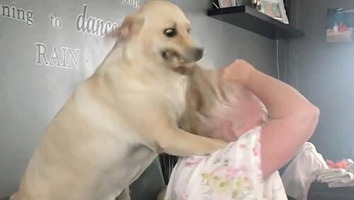 неистовая собачья любовь
