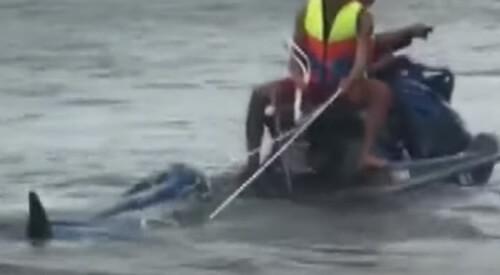 дельфина выбросило на берег