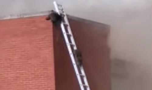 еноты на крыше склада