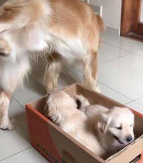 пёс помочился на щенков