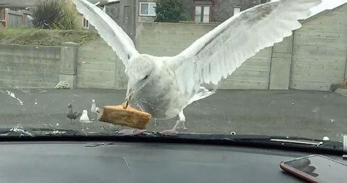 чайка съела кусок пирога