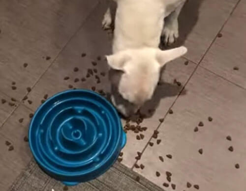 миска для медленного приёма пищи
