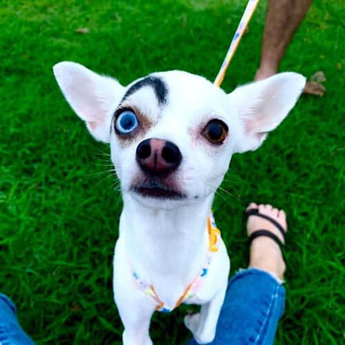 приютский пёс звезда интернета