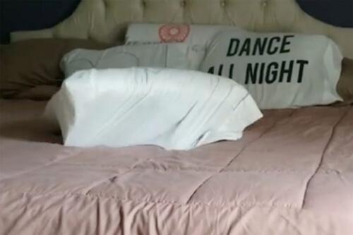 чихуахуа прячется в подушке