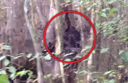 огромное чёрное существо в лесу