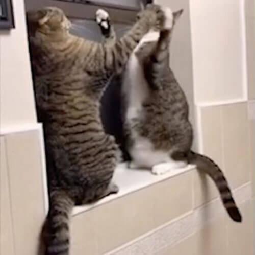 кошки дерутся на подоконнике