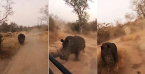 носорог погнался за туристами