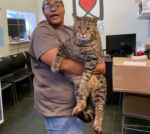 крупный кот ищет новый дом