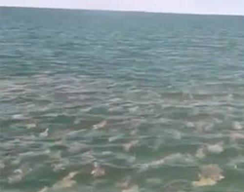 встреча с огромной стаей рыб