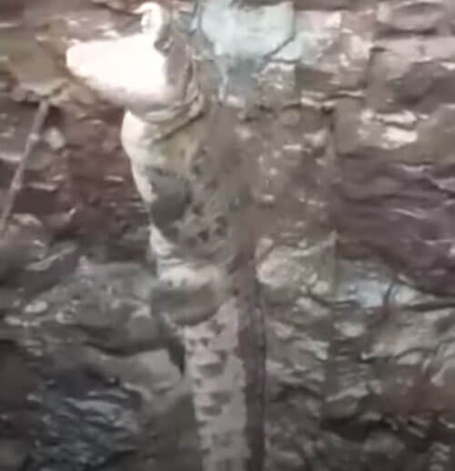 спасение крокодила из колодца