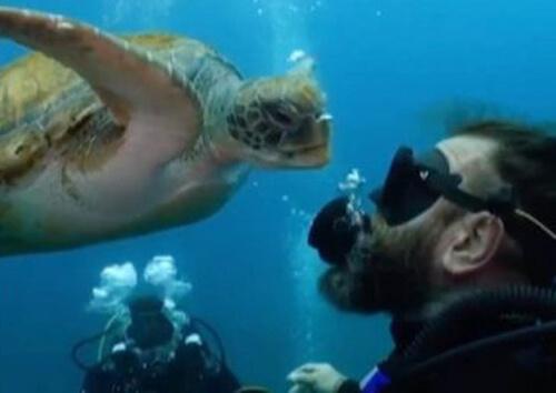 черепаха ест пузырьки воздуха