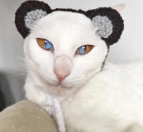 кошка с потрясающими глазами