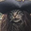 кот пират карибского моря
