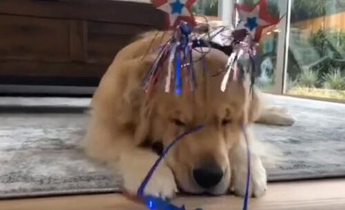 праздничный наряд щенка