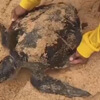 черепаха запуталась в пакете