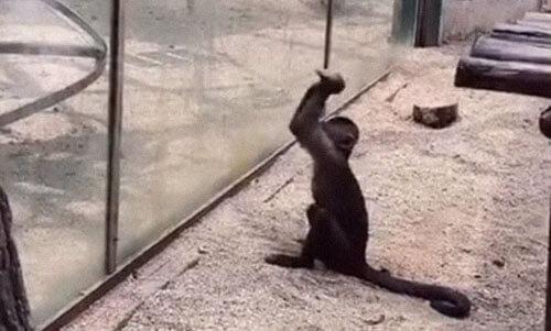 обезьяна замыслила хулиганство