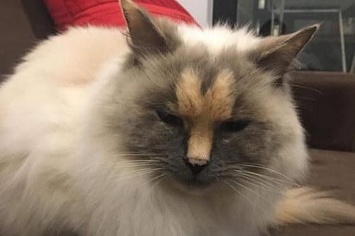 неудачный окрас приютской кошки