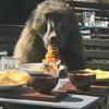 бабуин пришёл в ресторан