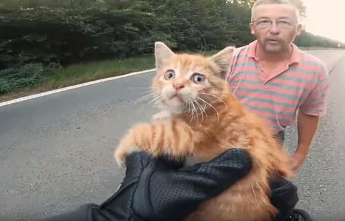 котёнок посреди дороги