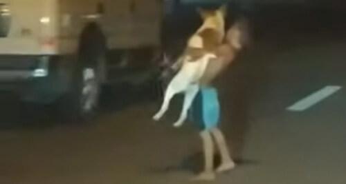 мальчик переходит дорогу с собакой
