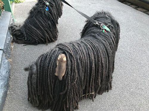 собака и маленькие опоссумы