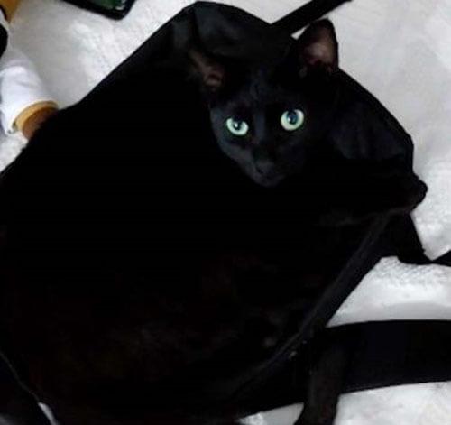 чёрный кот на чёрной сумке
