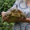 черепаха гуляла много месяцев