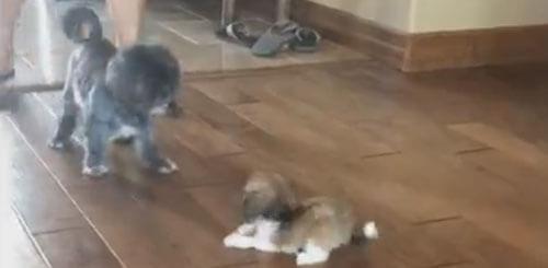щенок на скользком полу