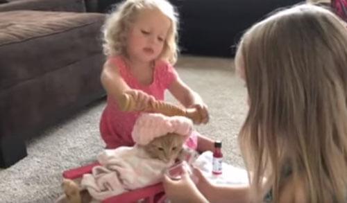 детский спа-салон для кошки