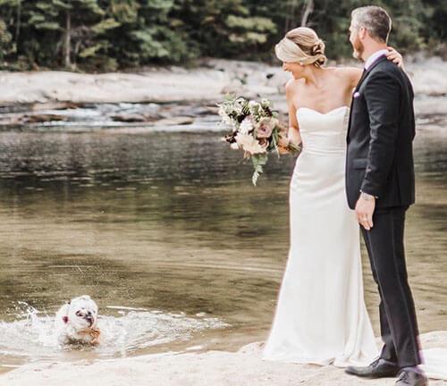 пёс искупался на свадьбе хозяев