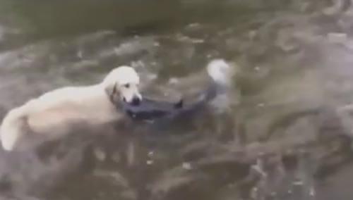 собака показала как ловить рыбу