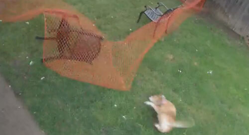 собака прыгает через ограду