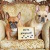 собаки ожидают прибавления